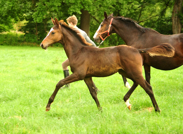 Foals, Yearlings and two year old horses for sale