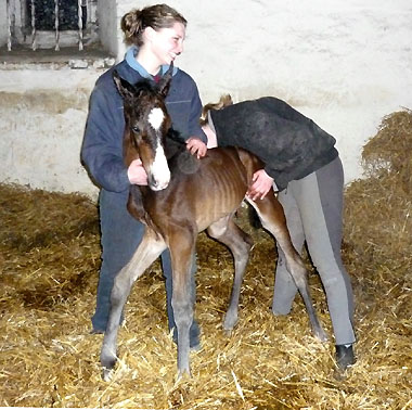 Darja and Marilena with our new colt by Symont