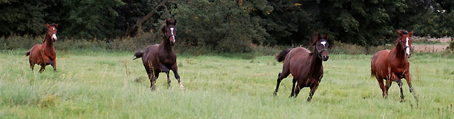 Our yearling colts in September 2008