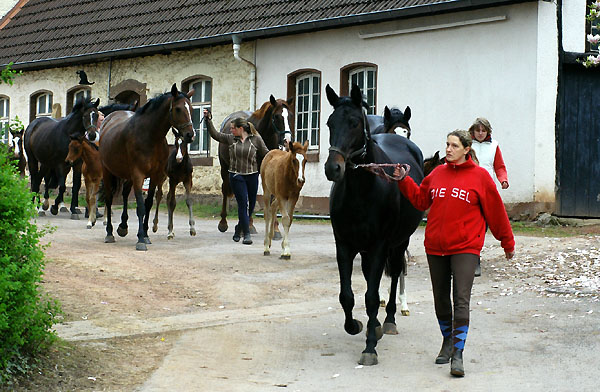 Our mares and foals on the way to the fields - Trakehner Gestüt Hämelschenburg - picture: Beate Langels