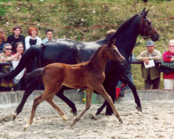 Schwalbenspiel by Exclusiv with her filly by Summertime