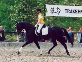 Vicenza by Showmaster (3-years old) - ridden by the 14 years old girl Larissa Stupperich