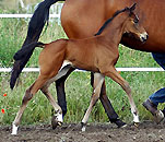 Filly by Showmaster x Summertime