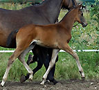 Colt by Summertime x Kostolany