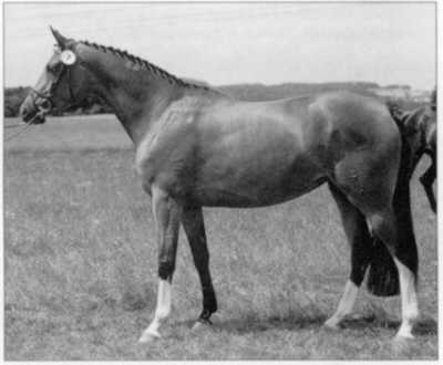 Agatha Christie - Champion at the central mare grading