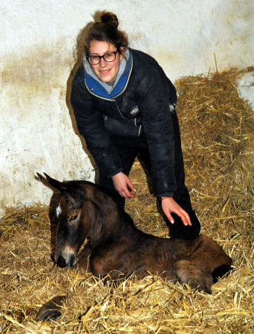 Trakehner Filly by Honoré du Soir out of Pr. a. StPrSt. Karena by Freudenfest