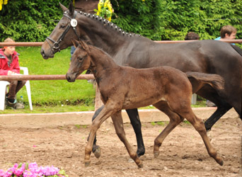 Filly by Oliver Twist x Kostolany