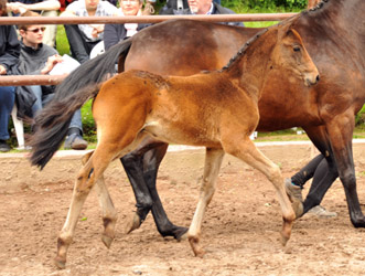 Colt by Oliver Twist x Summertime