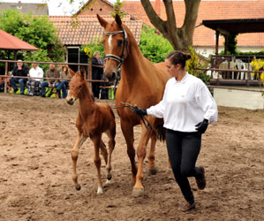 Filly by Oliver Twist x Kostolany - Foto Beate Langels