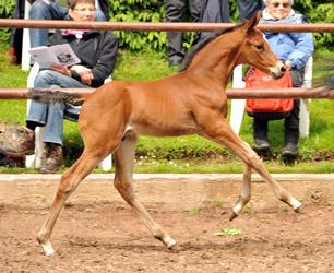 Colt by Saint Cyr x Summertime