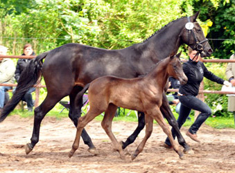 Filly by Saint Cyr x Summertime - Foto Beate Langels