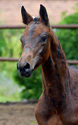 Colt by Summertime out of Pr.St. Esther by Kostolany