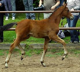 Filly by Summertime out of Sacre Coeur by Sixtus, Foto: Beate Langels, Hämelschenburg