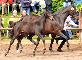 Schwalbensage by Grand Corazon x Summertime, Foto Beate Langels