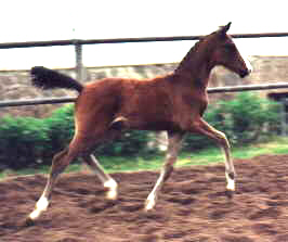 Colt by Freudenfest out of Schwalbenspiel by Exclusiv