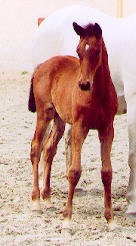 Filly by Summertime out of Thirza by Karon