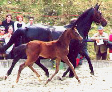 Filly by Summertime out of Schwalbenspiel by Exclusiv