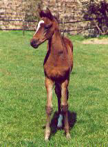 Filly by Summertime