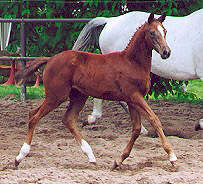 Filly by Freudenfest out of Feine Dame by Rockefeller