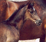 Filly by Kostolany out of Hekate by Exclusiv