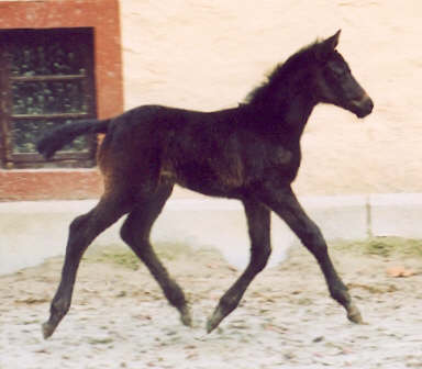 14 days old filly by Summertime out of Tavolara