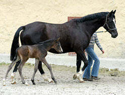Colt by Summertime out of Greta Garbo by Alter Fritz (one day old)