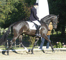 Hannah - 3 years old premium-mare by Freudenfest