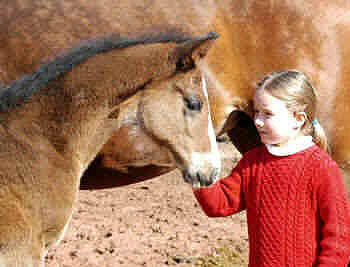 Isabell with a colt by Alter Fritz out of Guendalina