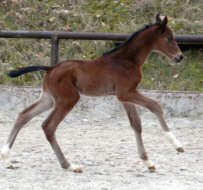 Two day old colt by Summertime out of premium-mare Kalmar by Exclusiv