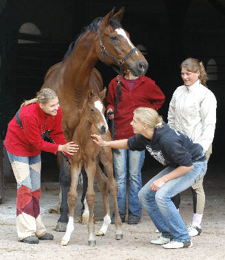 Trakehner filly by Exclusiv