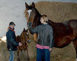 Colt by Exclusiv out of Kassuben by Enrico Caruso