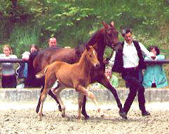 Wolfsliebe and her filly by Kostolany, Breeder: Hendrik Lindhorst, Emmerthal