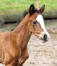 Filly by Freudenfest