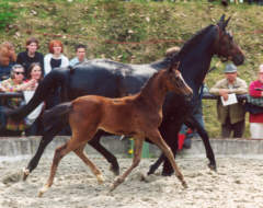 Schwalbenspiel (6-years old) with her filly by Summertime