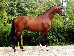 Segantini - 2-year old Trakehnre colt by Freudenfest out of Sankt Helena by Alter Fritz