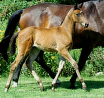 Filly by Shavalou out of Gloriette by Kostolany