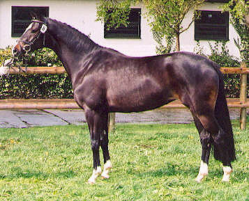 Starlett by Alter Fritz out of Sacre Noir - copyright by A. Gräfin Dohna