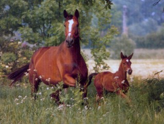 Gavotte with her filly by Kostolany