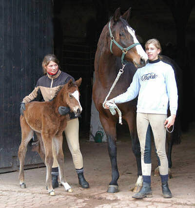 Trakehner filly by Summertime - Exclusiv
